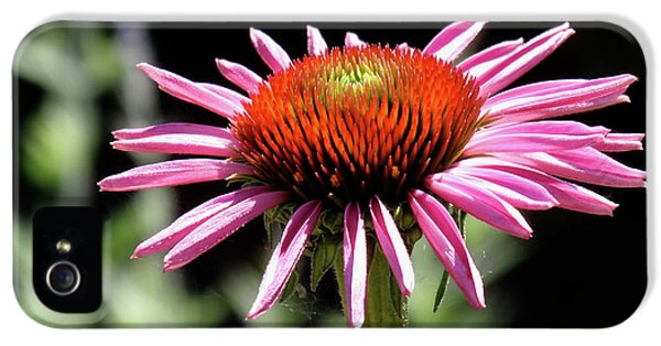 Pretty Pink Coneflower IPhone 5s Case by Rona Black