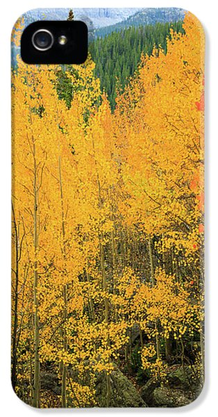 Pure Gold IPhone 5s Case by David Chandler