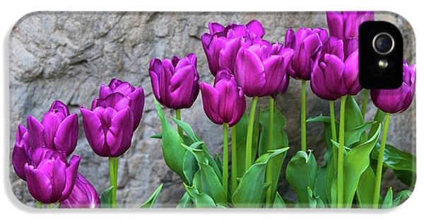Tulip iPhone 5s Case - Purple Tulips by Tom Mc Nemar
