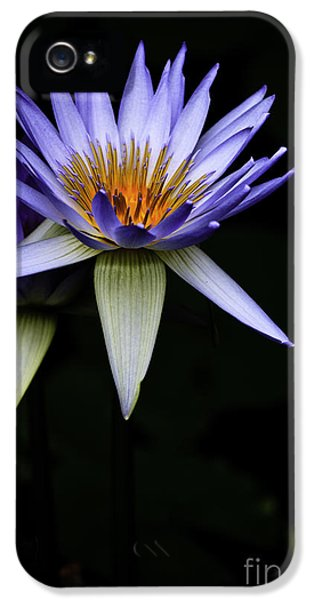 Purple Waterlily IPhone 5s Case by Avalon Fine Art Photography