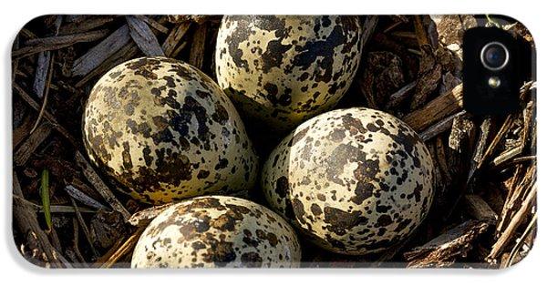 Quartet Of Killdeer Eggs By Jean Noren IPhone 5s Case by Jean Noren