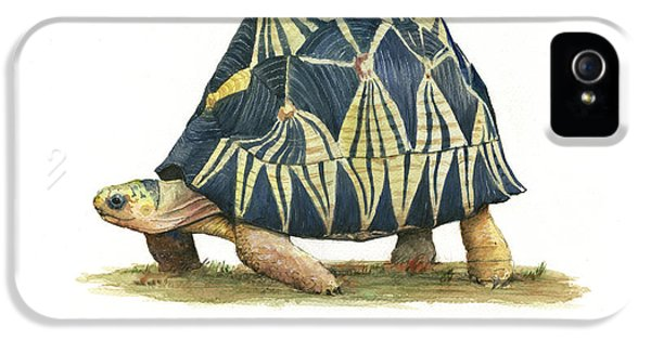 Radiated Tortoise  IPhone 5s Case by Juan Bosco