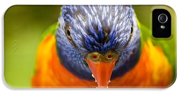 Rainbow Lorikeet IPhone 5s Case by Avalon Fine Art Photography