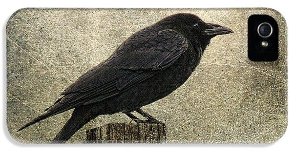 Raven IPhone 5s Case