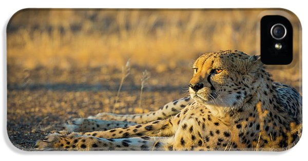Reclining Cheetah IPhone 5s Case by Inge Johnsson