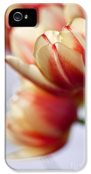 Tulip iPhone 5s Case - Red And White Tulips by Nailia Schwarz