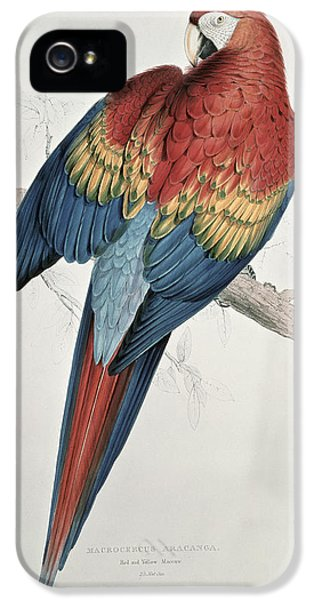 Macaw iPhone 5s Case - Red And Yellow Macaw  by Edward Lear
