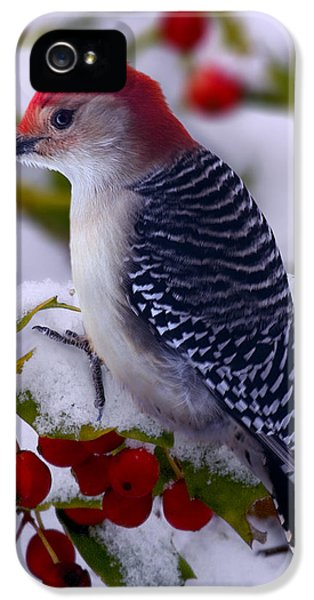 Woodpecker iPhone 5s Case - Red Bellied Woodpecker by Ron Jones