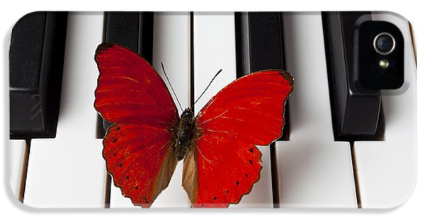 Butterfly iPhone 5s Case - Red Butterfly On Piano Keys by Garry Gay