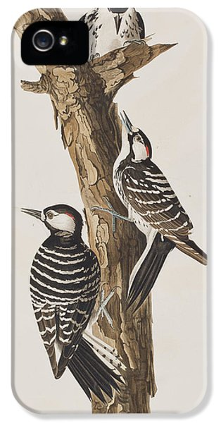 Red-cockaded Woodpecker IPhone 5s Case