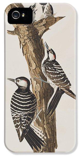 Red-cockaded Woodpecker IPhone 5s Case by John James Audubon