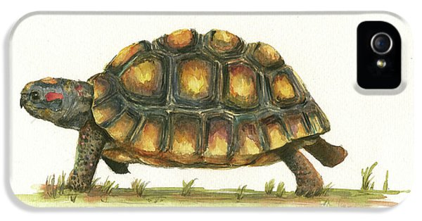 Red Footed Tortoise  IPhone 5s Case by Juan Bosco