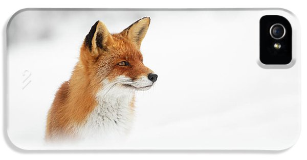 Fox iPhone 5s Case - Red Fox Out Of The Blue by Roeselien Raimond