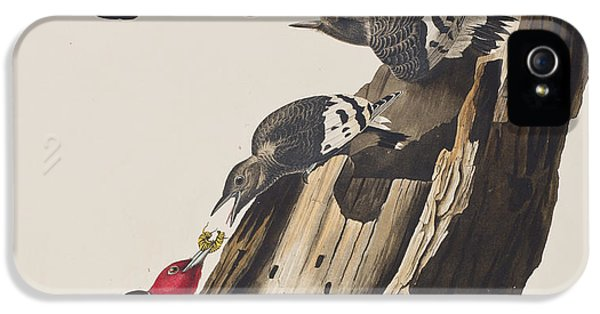 Woodpecker iPhone 5s Case - Red Headed Woodpecker by John James Audubon