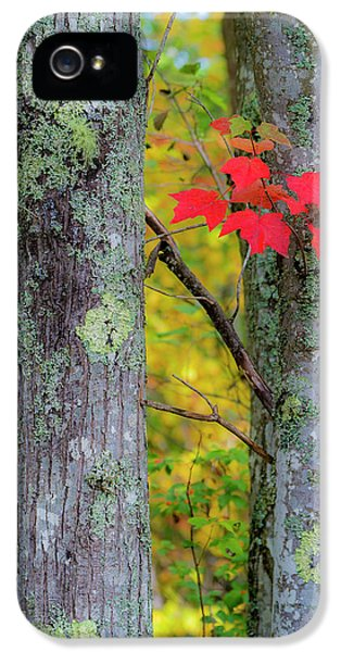 Red Leaves IPhone 5s Case