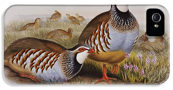 Red-legged Partridges IPhone 5s Case by John Gould
