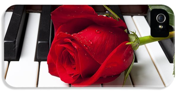 Floral iPhone 5s Case - Red Rose On Piano Keys by Garry Gay