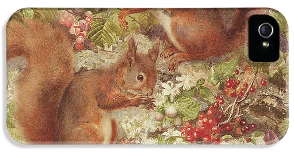 Red Squirrels Gathering Fruits And Nuts IPhone 5s Case by Rosa Jameson