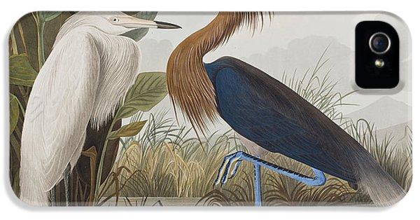 Reddish Egret IPhone 5s Case by John James Audubon