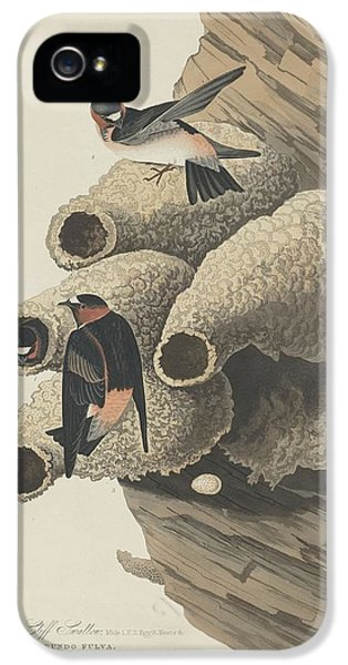 Republican Cliff Swallow IPhone 5s Case by Dreyer Wildlife Print Collections