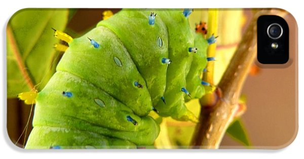 IPhone 5s Case featuring the photograph Robin Moth Caterpillar by Claire Bull