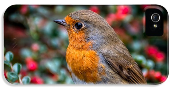 Robin Redbreast IPhone 5s Case by Adrian Evans