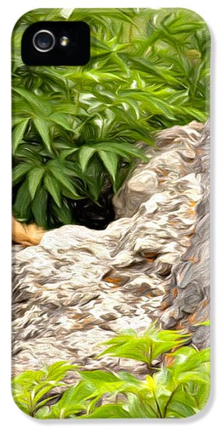 Rock Chuck IPhone 5s Case by Lana Trussell