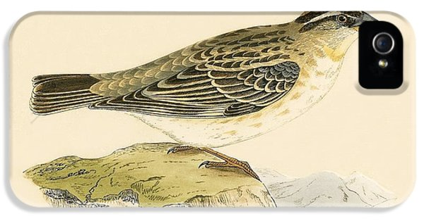 Rock Sparrow IPhone 5s Case by English School
