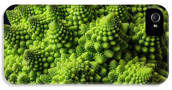 Romanesco Broccoli IPhone 5s Case