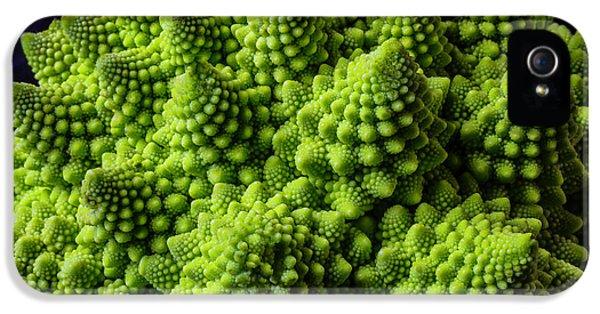 Romanesco Broccoli IPhone 5s Case by Garry Gay