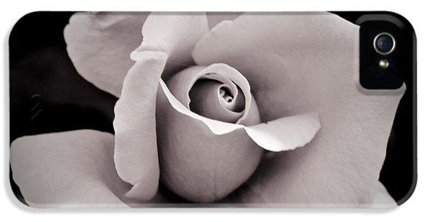 Rose IPhone 5s Case by Hitendra SINKAR