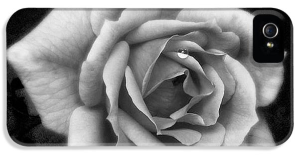 Beautiful iPhone 5s Case - Rose In Mono. #flower #flowers by John Edwards