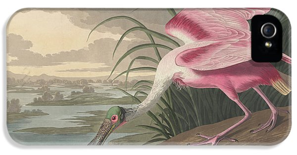 Roseate Spoonbill, 1836  IPhone 5s Case by John James Audubon