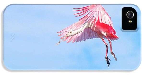 Roseate Spoonbill Final Approach IPhone 5s Case by Mark Andrew Thomas