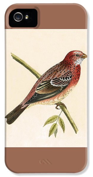 Finch iPhone 5s Case - Rosy Bullfinch by English School