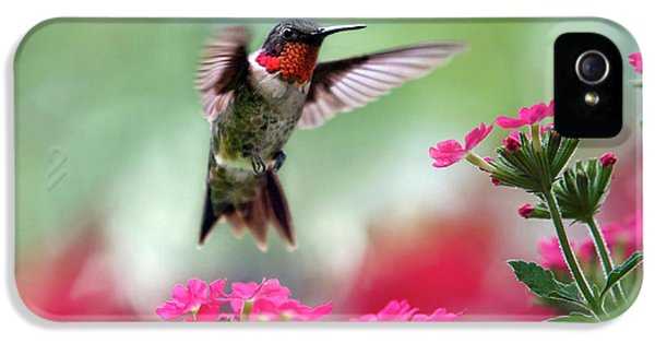 Humming Bird iPhone 5s Case - Ruby Garden Jewel by Christina Rollo
