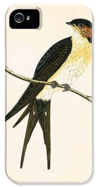Rufous Swallow IPhone 5s Case by English School