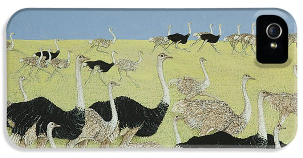 Ostrich iPhone 5s Case - Rush Hour by Pat Scott
