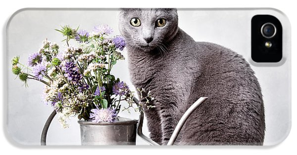 Cat iPhone 5s Case - Russian Blue 02 by Nailia Schwarz