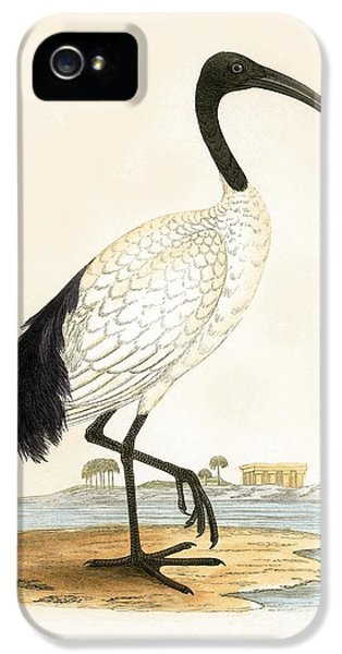 Ibis iPhone 5s Case - Sacred Ibis by English School