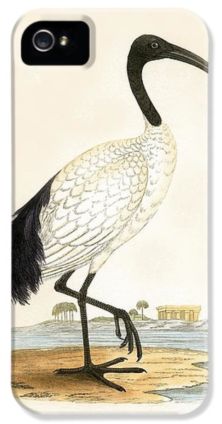 Sacred Ibis IPhone 5s Case by English School