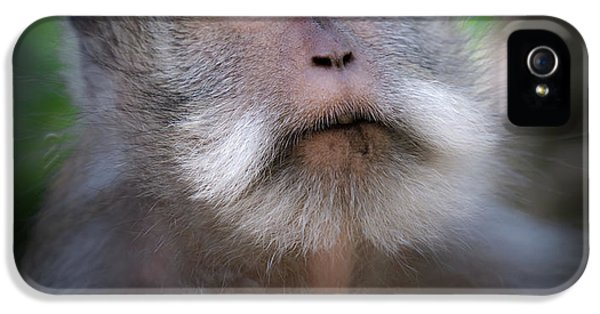 Sacred Monkey Forest Sanctuary IPhone 5s Case by Larry Marshall