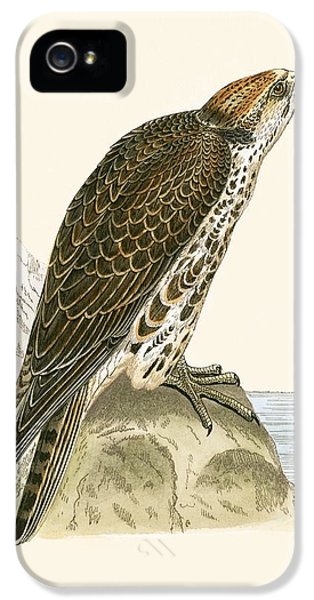 Saker Falcon IPhone 5s Case by English School