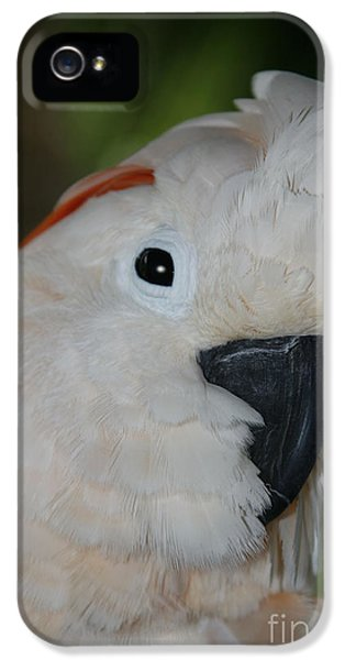 Salmon Crested Cockatoo IPhone 5s Case by Sharon Mau