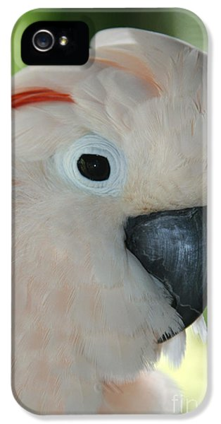 Salmon Crested Moluccan Cockatoo IPhone 5s Case by Sharon Mau