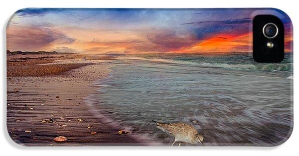 Sandpiper iPhone 5s Case - Sandpiper Sunrise by Betsy Knapp