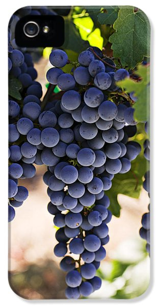 Sauvignon Grapes IPhone 5s Case by Garry Gay