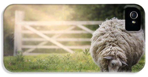 Sheep iPhone 5s Case - Sheep by Joana Kruse