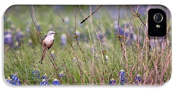 Scissor-tailed Flycatchers IPhone 5s Case