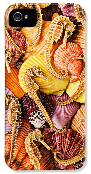 Sea Horses And Sea Shells IPhone 5s Case by Garry Gay